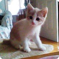 Adopt A Pet :: Buster - Kirkwood, DE