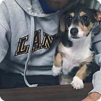 Adopt A Pet :: Sally Brown - Jersey City, NJ
