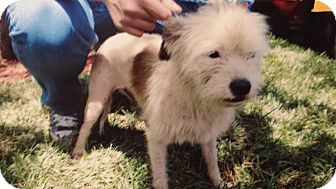 Terrier (Unknown Type, Medium) Mix Dog for adoption in Palmetto Bay, Florida - Gracie aka tweeter