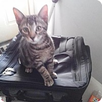 Adopt A Pet :: Drake - Ridgewood, NY