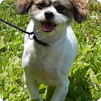 Adopt A Pet :: Shaggy(15 lb) Truly Perfect! - SUSSEX, NJ