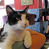 Adopt A Pet :: Laddie - Fairfax, VA