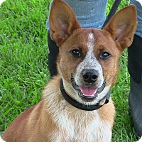 Adopt A Pet :: Wyatt - Texico, IL