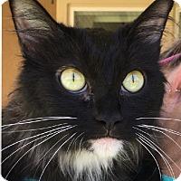 Adopt A Pet :: Alicia - Winchester, CA