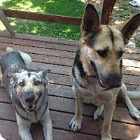 German Shepherd Dog Dog for adoption in Pt. Richmond, California - CALI