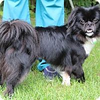 Adopt A Pet :: Sophie - Portage, WI