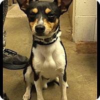 Adopt A Pet :: MOJO - Cadiz, OH