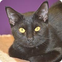 Adopt A Pet :: Georgia - San Leon, TX