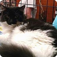 Adopt A Pet :: *Lucy - Pembroke, GA