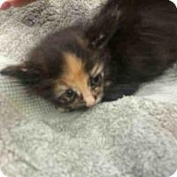 Adopt A Pet :: NATALIE - San Martin, CA