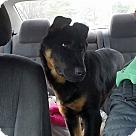 Adopt A Pet :: Sheppy