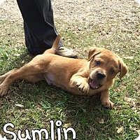 Adopt A Pet :: Sumlin - Mobile, AL