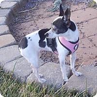Adopt A Pet :: Gwen - Apple Valley, UT