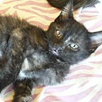 Adopt A Pet :: Maude - Phoenix, AZ