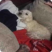 Adopt A Pet :: A420741 - San Antonio, TX
