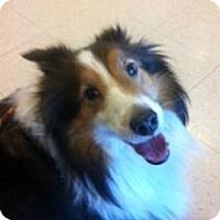 Adopt A Pet :: Buddy - Indiana, IN