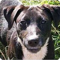 Adopt A Pet :: Cahokia - Albany, NY