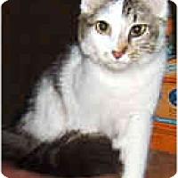 Adopt A Pet :: Mewsette - Dallas, TX