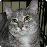Adopt A Pet :: Gia - Frederick, MD
