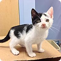 Adopt A Pet :: Francie - Oyster Bay, NY
