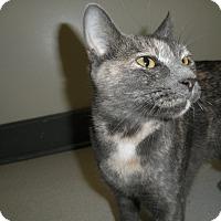 Adopt A Pet :: Aspen - Milwaukee, WI