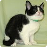 Adopt A Pet :: Shiloh - Powell, OH