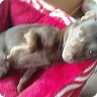 Adopt A Pet :: Bebe