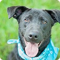 Adopt A Pet :: Parker - Houston, TX