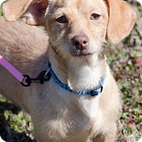 Adopt A Pet :: Axel - Arlington, TN