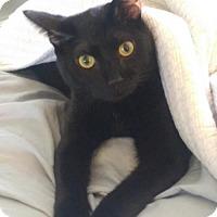 Adopt A Pet :: Sully - Royal Palm Beach, FL