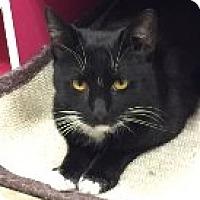 Adopt A Pet :: Gus - Manchester, CT