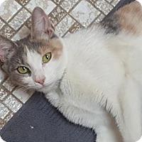 Adopt A Pet :: Ivy - Baltimore, MD
