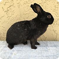 Adopt A Pet :: Gretta - Bonita, CA