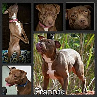 Adopt A Pet :: Frannie - Miami, FL