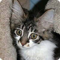 Adopt A Pet :: Rose - Santa Rosa, CA