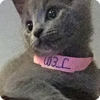 Adopt A Pet :: Jem - Richmond, VA
