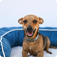 Adopt A Pet :: Prince Charming - Auburn, CA