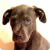 Adopt A Pet :: Trista - Boston, MA