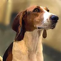 Hound (Unknown Type) Mix Dog for adoption in Alpharetta, Georgia - Hannalei