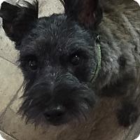 Adopt A Pet :: Neo - Durham, NC