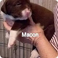 Adopt A Pet :: Macon - Tampa, FL
