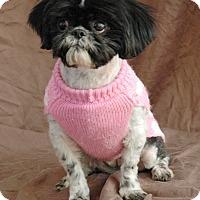 Adopt A Pet :: Cupcake - Lawrenceville, GA