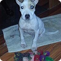 Adopt A Pet :: PINKY - Golsboro, NC