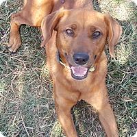 Adopt A Pet :: Darla (ETAA) - Washington, DC