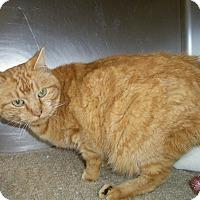 Adopt A Pet :: SERENA - Medford, WI