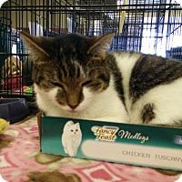 Adopt A Pet :: Janie - Avon, OH