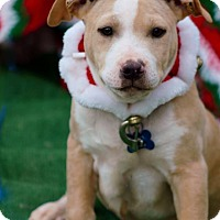 Adopt A Pet :: Edgar in CT - Manchester, CT
