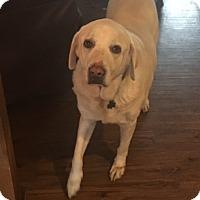 Adopt A Pet :: Gloria - Brattleboro, VT