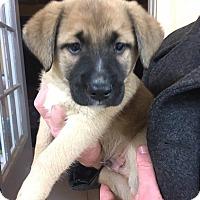 Adopt A Pet :: Cooper - Arlington, MA