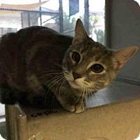 Adopt A Pet :: LILAH - San Antonio, TX